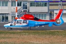 いおりさんが、東京ヘリポートで撮影した川崎市消防航空隊 AS365N3 Dauphin 2の航空フォト(写真)