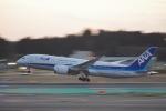 eagle-driver1998さんが、成田国際空港で撮影した全日空 787-8 Dreamlinerの航空フォト(写真)