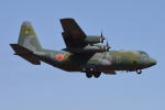 350JMさんが、厚木飛行場で撮影した航空自衛隊 C-130H Herculesの航空フォト(写真)