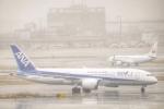 katsuura.Dさんが、羽田空港で撮影した全日空 787-8 Dreamlinerの航空フォト(写真)