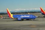 みそらさんが、シアトル タコマ国際空港で撮影したサウスウェスト航空 737-8H4の航空フォト(飛行機 写真・画像)