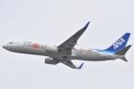 木のピー乃木坂46&DAPUMP好きさんが、関西国際空港で撮影した全日空 737-881の航空フォト(写真)