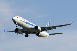 panchiさんが、那覇空港で撮影した全日空 737-881の航空フォト(写真)