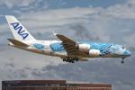 Cozy Gotoさんが、成田国際空港で撮影した全日空 A380-841の航空フォト(写真)