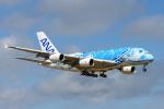 kuraykiさんが、成田国際空港で撮影した全日空 A380-841の航空フォト(写真)