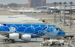 マウンテンエアウェイズさんが、成田国際空港で撮影した全日空 A380-841の航空フォト(写真)