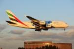 new_2106さんが、成田国際空港で撮影したエミレーツ航空 A380-861の航空フォト(写真)