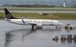 apphgさんが、那覇空港で撮影した全日空 737-881の航空フォト(写真)