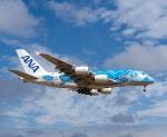 JG太郎さんが、成田国際空港で撮影した全日空 A380-841の航空フォト(写真)