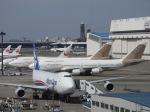 SKY☆MOTOさんが、成田国際空港で撮影したアトラス航空 747-481の航空フォト(写真)