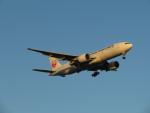 カップメーンさんが、羽田空港で撮影した日本航空 777-246/ERの航空フォト(写真)