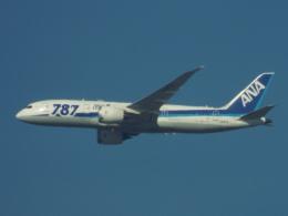 otromarkさんが、八尾空港で撮影した全日空 787-8 Dreamlinerの航空フォト(飛行機 写真・画像)