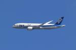 アイトムさんが、八尾空港で撮影した全日空 787-8 Dreamlinerの航空フォト(写真)
