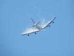 アイスコーヒーさんが、函館空港で撮影した日本航空 747-346の航空フォト(飛行機 写真・画像)