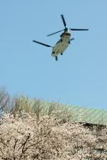 あきらっすさんが、防衛省市ヶ谷へリポートで撮影した航空自衛隊 CH-47J/LRの航空フォト(写真)