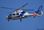 れんしさんが、福岡空港で撮影したオールニッポンヘリコプター AS365N2 Dauphin 2の航空フォト(写真)