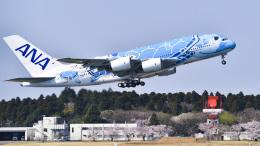 パンダさんが、成田国際空港で撮影した全日空 A380-841の航空フォト(飛行機 写真・画像)