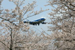 take_2014さんが、成田国際空港で撮影したエアブリッジ・カーゴ・エアラインズ 747-8HVFの航空フォト(飛行機 写真・画像)