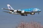 apphgさんが、成田国際空港で撮影した全日空 A380-841の航空フォト(写真)