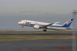 まきっち!さんが、羽田空港で撮影した全日空 787-8 Dreamlinerの航空フォト(写真)