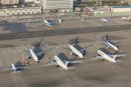 安芸あすかさんが、羽田空港で撮影した日本航空 777-246/ERの航空フォト(写真)