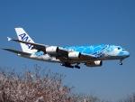 FT51ANさんが、成田国際空港で撮影した全日空 A380-841の航空フォト(写真)