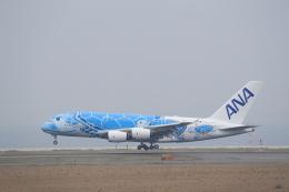 516105さんが、関西国際空港で撮影した全日空 A380-841の航空フォト(写真)