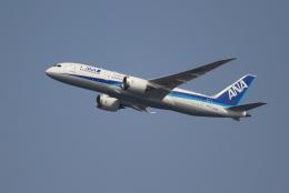 OMAさんが、羽田空港で撮影した全日空 787-8 Dreamlinerの航空フォト(写真)