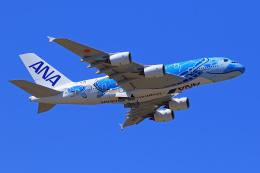 オポッサムさんが、成田国際空港で撮影した全日空 A380-841の航空フォト(写真)