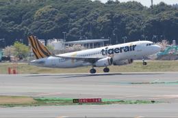 ANA744Foreverさんが、成田国際空港で撮影したタイガーエア台湾 A320-232の航空フォト(写真)