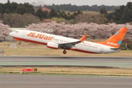 OMAさんが、成田国際空港で撮影したチェジュ航空 737-8K5の航空フォト(写真)