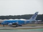 worldstar777さんが、成田国際空港で撮影した全日空 A380-841の航空フォト(写真)