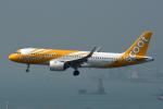 kansaigroundさんが、香港国際空港で撮影したスクート A320-271Nの航空フォト(写真)