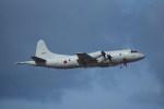 kumagorouさんが、那覇空港で撮影した海上自衛隊 P-3Cの航空フォト(写真)