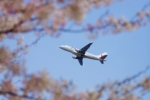 kodamax1975さんが、新潟空港で撮影したジェイ・エア ERJ-170-100 (ERJ-170STD)の航空フォト(写真)