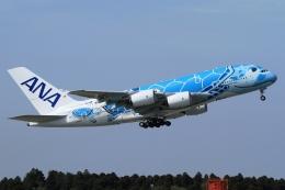 ウッディーさんが、成田国際空港で撮影した全日空 A380-841の航空フォト(飛行機 写真・画像)