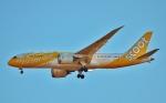 鉄バスさんが、成田国際空港で撮影したスクート 787-8 Dreamlinerの航空フォト(写真)