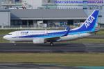 いおりさんが、福岡空港で撮影した全日空 737-781の航空フォト(写真)