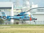 otromarkさんが、八尾空港で撮影した沖縄県警察 AS365N3 Dauphin 2の航空フォト(写真)