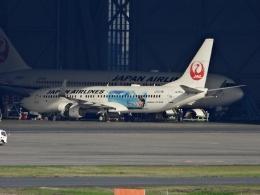 チャレンジャーさんが、羽田空港で撮影した日本航空 737-846の航空フォト(写真)