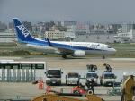 ヒロリンさんが、福岡空港で撮影した全日空 737-781の航空フォト(写真)