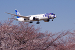 yabyanさんが、成田国際空港で撮影した全日空 787-9の航空フォト(写真)