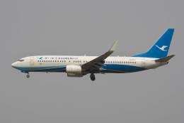 hiko_chunenさんが、成田国際空港で撮影した厦門航空 737-86Nの航空フォト(飛行機 写真・画像)