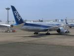 ヒロリンさんが、羽田空港で撮影した全日空 787-8 Dreamlinerの航空フォト(写真)