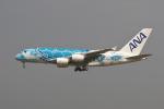 hiko_chunenさんが、成田国際空港で撮影した全日空 A380-841の航空フォト(写真)