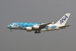 hiko_chunenさんが、成田国際空港で撮影した全日空 A380-841の航空フォト(飛行機 写真・画像)