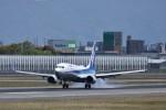 ぬま_FJHさんが、伊丹空港で撮影した全日空 737-881の航空フォト(写真)