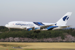 yabyanさんが、成田国際空港で撮影したマレーシア航空 A380-841の航空フォト(写真)