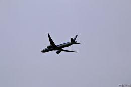 Jin Bergqiさんが、成田国際空港で撮影した全日空 777-381/ERの航空フォト(写真)