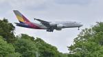 パンダさんが、成田国際空港で撮影したアシアナ航空 A380-841の航空フォト(写真)